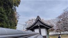 旧豊宮崎文庫🌸オヤネザクラ