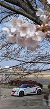 宮川堤桜並木お花見チェックポイント