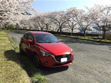 桜、満開^^