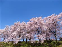 山梨県は桃も桜も綺麗でした