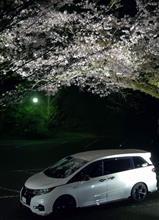 信貴山スカイライン 鐘の鳴る展望台の夜桜