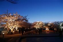 桜2021 PART1 撮り鉄&夜桜ライトアップ編!
