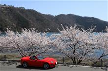 駆け足で駆け抜けた今年の桜ドライブ