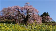 福島県三春町の滝桜