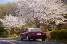 2021年の桜たち