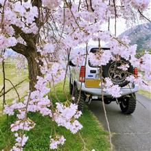 枝垂れ桜とお蕎麦