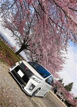 桜×VOXY Part4
