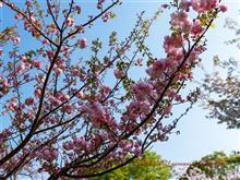 【2021桜特集⑪】今年は里桜の開花も早かった Vol.2
