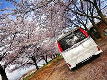 桜×VOXY Part5
