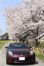 2021桜フォトムービー