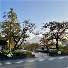 ふらりと お散歩⛩ 〜 今年も桜を堪能できました🌸