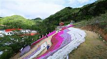 ヤマサ蒲鉾 芝桜の小道