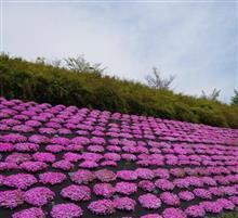 桜の季節の次は?!