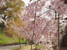 桜舞い散る中に忘れた。。。
