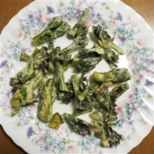 MINI原人のRINDO TREK WONDER 2021 @ 阿分線:決死の山菜とり