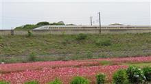 新幹線とお花畑