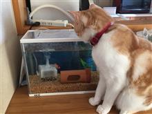 ネコと金魚の両立は可能か? その2