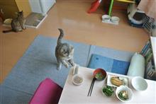 〔隔週〕先週、今週の朝食(9)