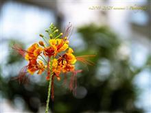 夏の睡蓮と温室の仲間たち