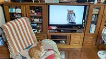 みーたん、珍しくテレビを見てました