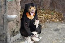 東山動植物園のマーチン君🐻に癒やされます😄