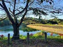 【ダムシリーズ56、竹沼ダム】愛称タケポン、緑が映える群馬のアースダム。