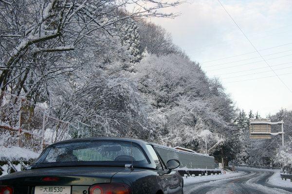 雪を被った白い枝と黒っぽい緑のロードスター