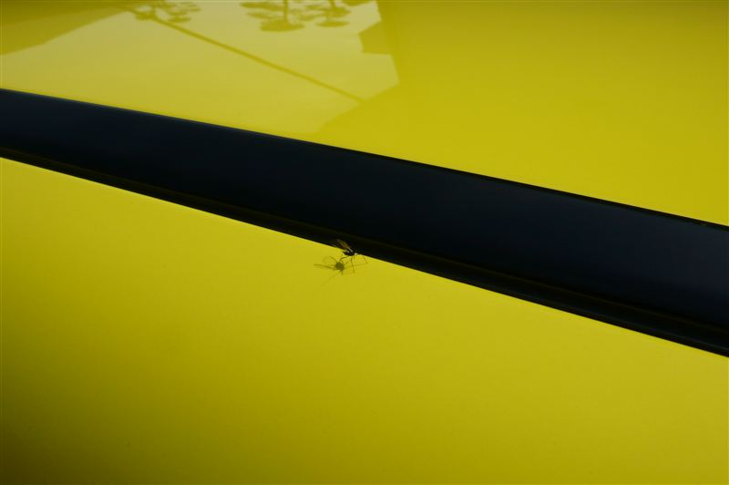 黄色には・・・