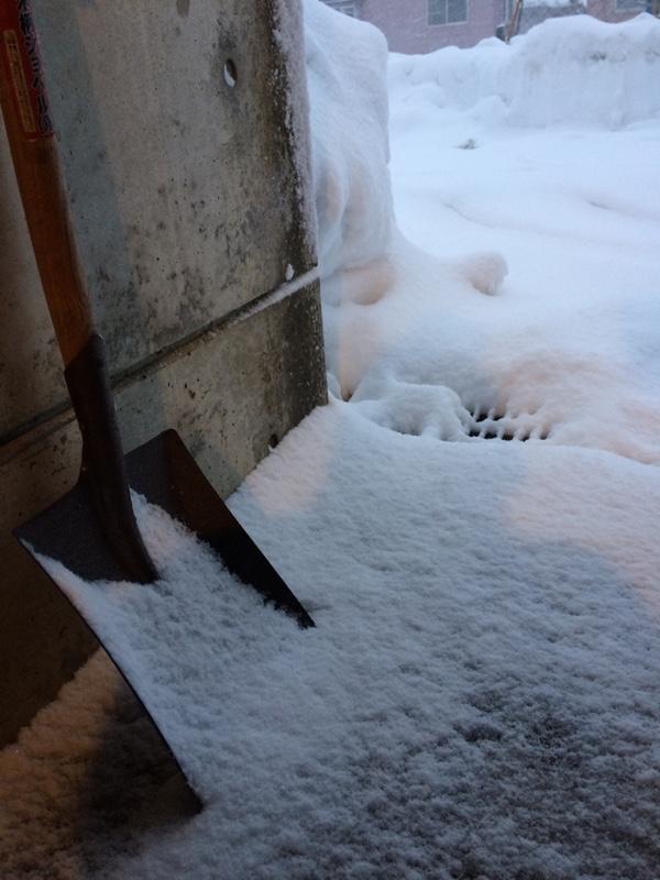 充電して越冬する宗一郎。