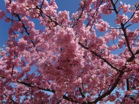 桜~2018.3.11