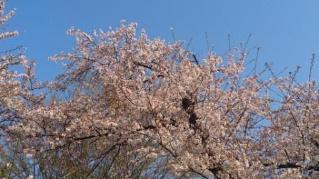 春のこんな日に。