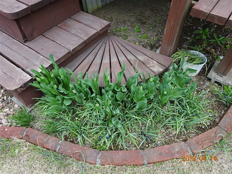 4月14日の庭の様子