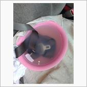 シートベルトを洗浄の画像