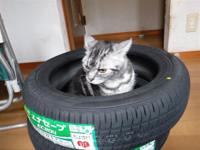 フロントタイヤ新調