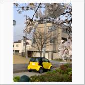 桜満開🌸<br /> イエロースマートは目立ちますね!<br />