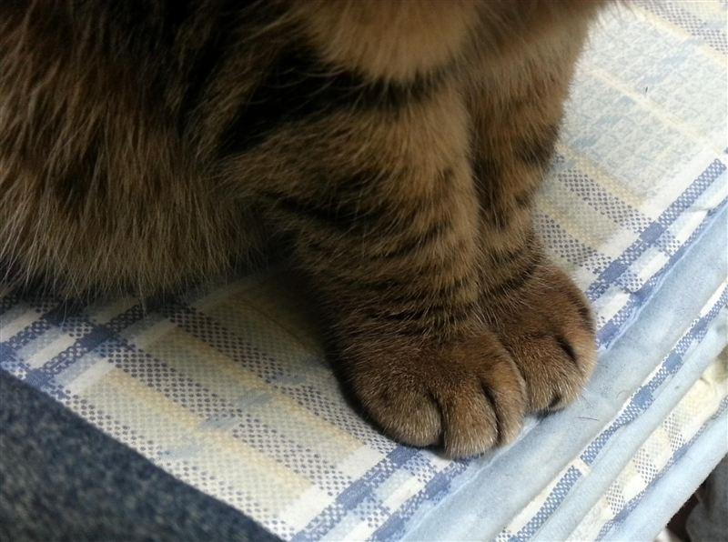 猫純正 ネコパンチスパイクタイヤ