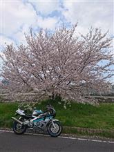 CBR400RRヨシムラ S/Oチタンサイレンサーの単体画像