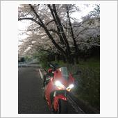 スフィアライト スフィアライトLEDライジングバイク用5500K H11型