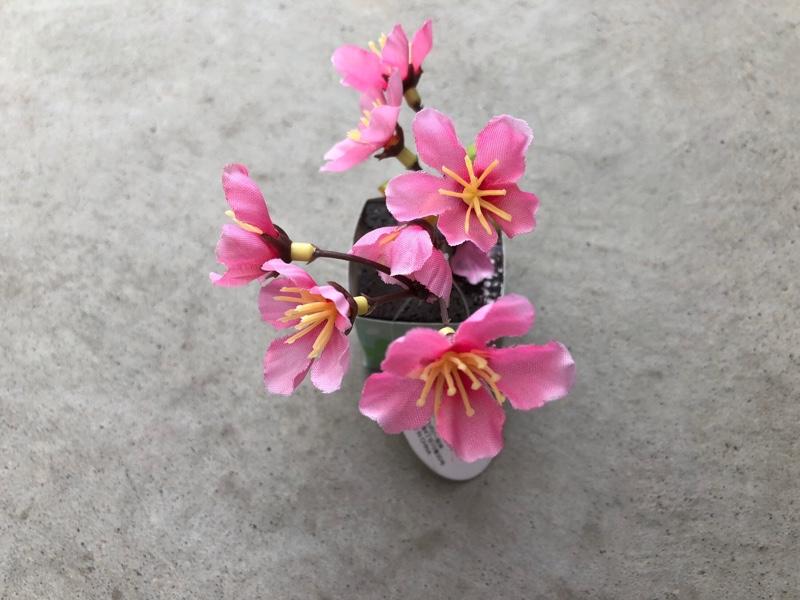 SERIA 桜オブジェ