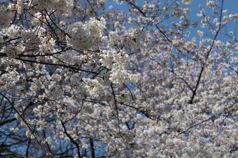 春休みで暇を持て余している子供達にせがまれて。。<br /> 行って来ました(^^;<br /> <br /> まずは上野駅周辺へ…<br /> <br /> 桜が良い感じで咲いてました♪<br /> <br /> っつ~か、花見客が多くて凄かったですな(^^;