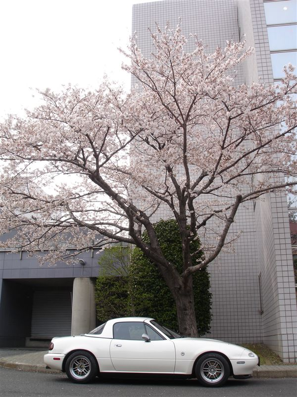 今年もギリギリ桜と一緒に28Rを撮ることが出来ました(^^)<br /> <br /> 近所での撮影です♪<br /> <br /> 1