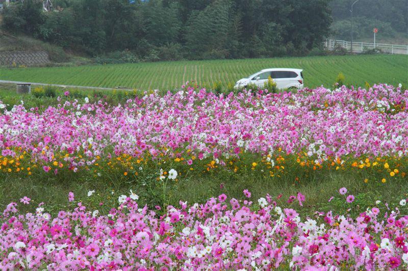 小雨が降る中、おもしろいところを見つけ、停車しました。<br /> <br /> コスモスがさいている畑(休耕田)・・・<br /> <br /> よくある風景ですよね。