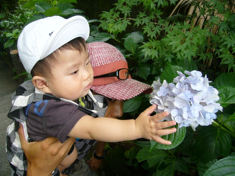 紫陽花とじんじん♪