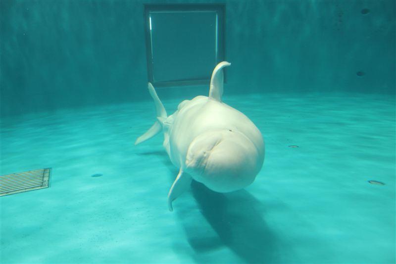 <br /> 白イルカ~