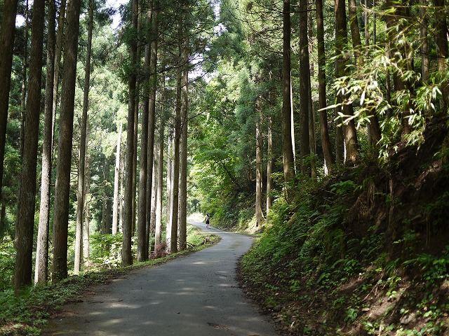 森林浴場コースと言うだけあり<br /> <br /> マイナスイオンが漂い気持ち良いコースです