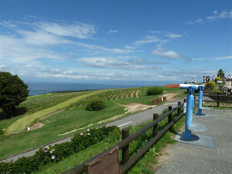 あわじ花さじき。前の相棒であるスイフトさんと来た時は曇天だったので、今回は全く印象が違う。ちょっとした北海道みたい。