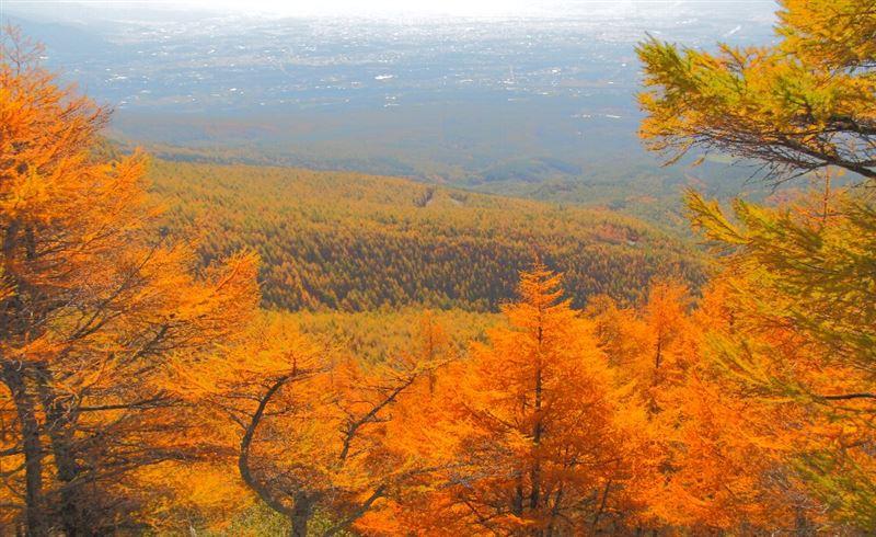黄葉の山頂
