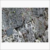 復元後の石垣がキッチリ四角いのは、もはや自然石を積み上げるだけの石垣を作れる職人がいないからだとか。<br /> ちょっと、いくらなんでもハッキリと復元後がわかるのはアレな気もするけど、まぁこれも時代の流れを勉強するいい材料になるか。<br /> <br /> ひととおり首里城を見て、満足。<br /> 次に沖縄に来るときはぜひ戦争関連の遺構を見に行きたい。<br /> <br /> ところで空港行きのバスがわからなかったので時刻表の前でウロウロしてたら、地元の女学生が親切に教えてくれた。<br /> もしかしたら「旅行者に親切にしよう!」みたいな教えがあるのかなー。<br /> 外国人旅行者も多い沖縄本島なので、こういう活動は良いことだ。<br /> <br /> ただ、沖縄は都会すぎて私にはちょっときついな。