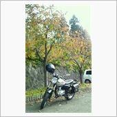 紅葉を楽しむ林道ソロツー