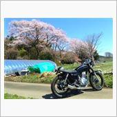 亀井家の桜(5.Apr.'14)